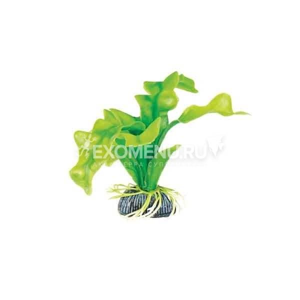Растение 1314
