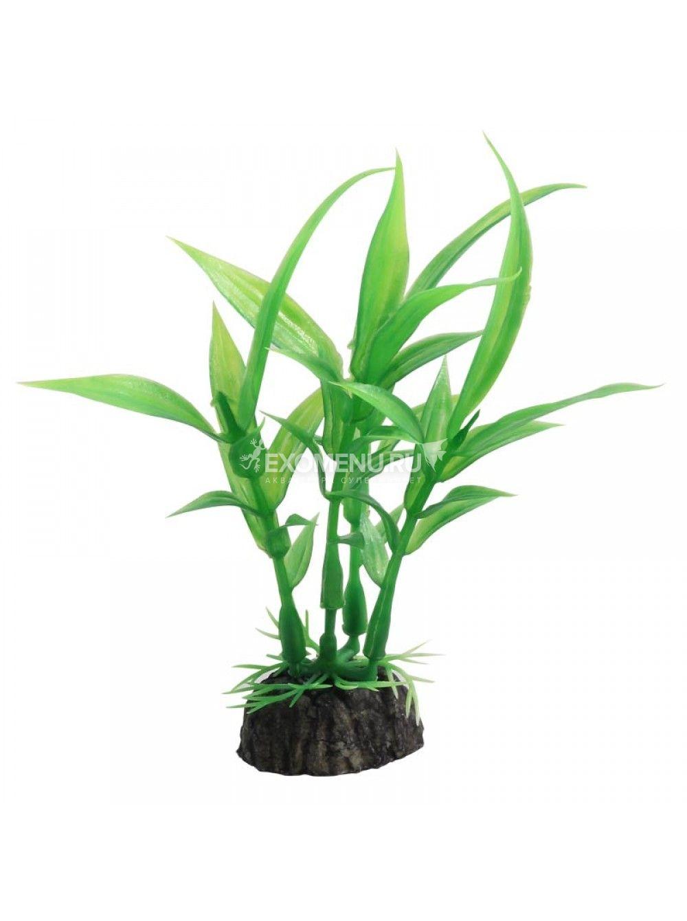 Растение 1029LD