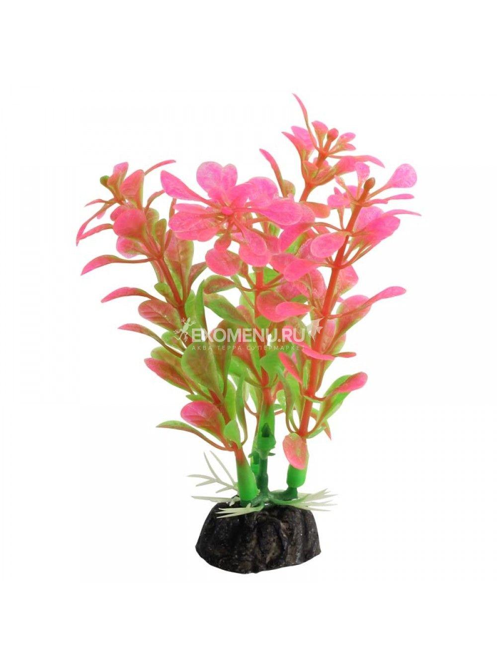Растение 1031LD