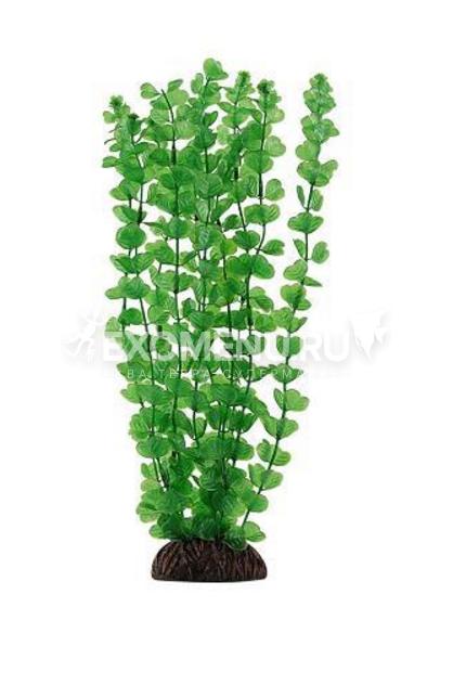 Растение 4673
