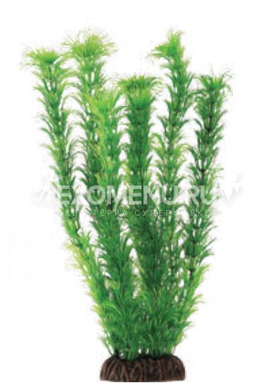 Растение 4682