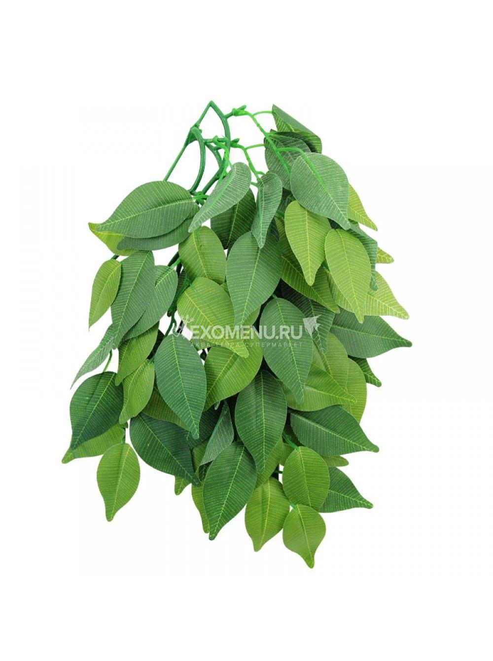 Растение 002TP