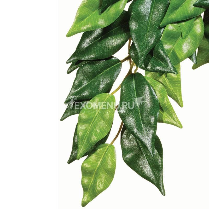 Тропическое растение Jungle Plants Фикус, среднее, 55х25 см