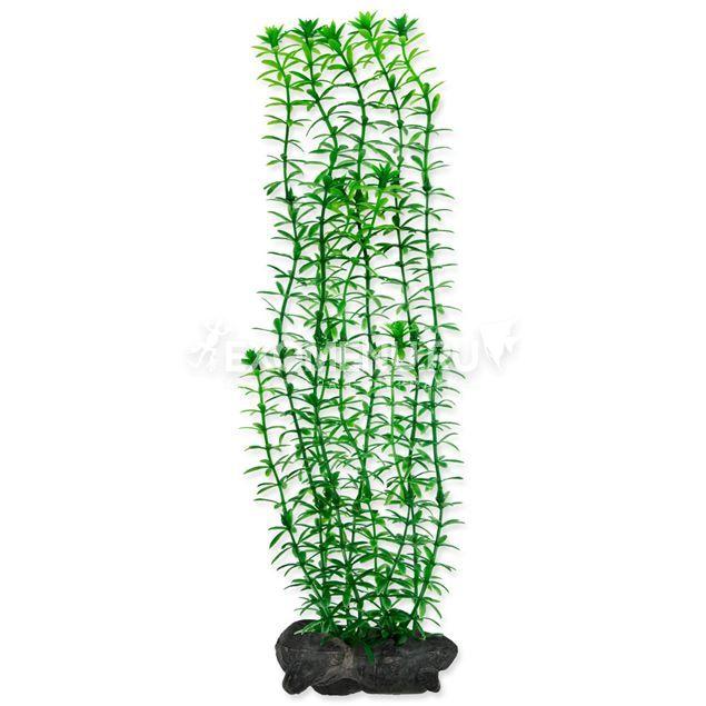 Растение аквариумное Anacharis (L) 30 см. с утяжелителем 270503 фото