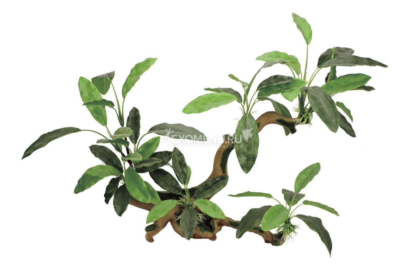 ArtUniq Branched Driftwood With Anubias lanceolata L - Декоративная композиция из пластика