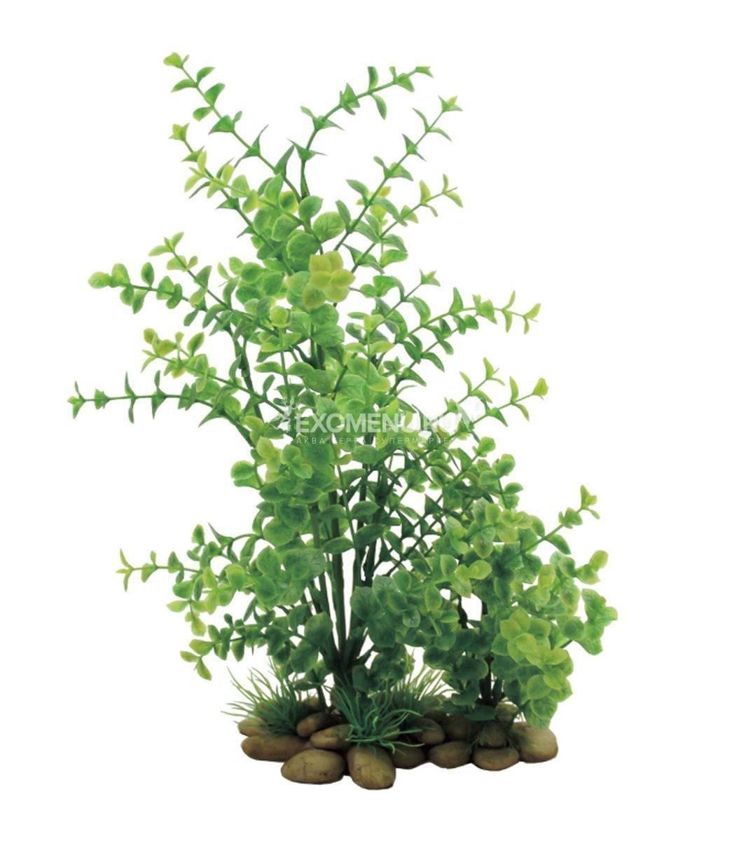 ArtUniq Lysimachia 30 - Искусственное растение Лизимахия, 30 см