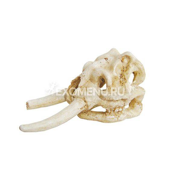 ArtUniq Elephant Skull - Искусственная декорация