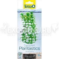 Растение аквариумное Anacharis (S) 15см. с утяжелителем 270176