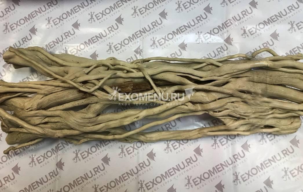 Лиана Плющ Субтропический 40-60 см фото
