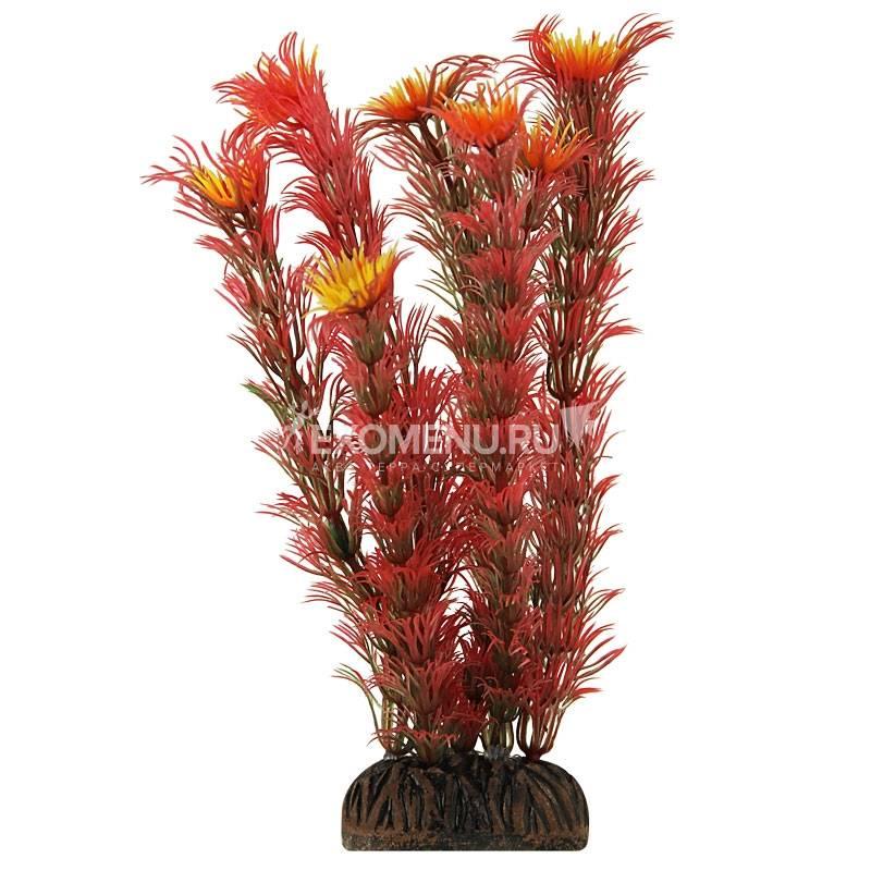 Растение 1999