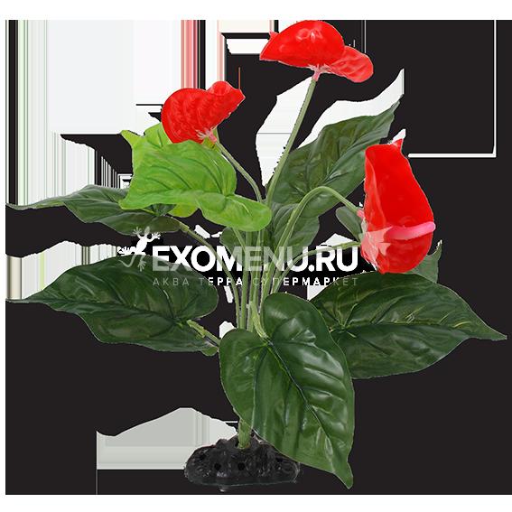 Растение пластиковое Антуриум цветущий 40 см