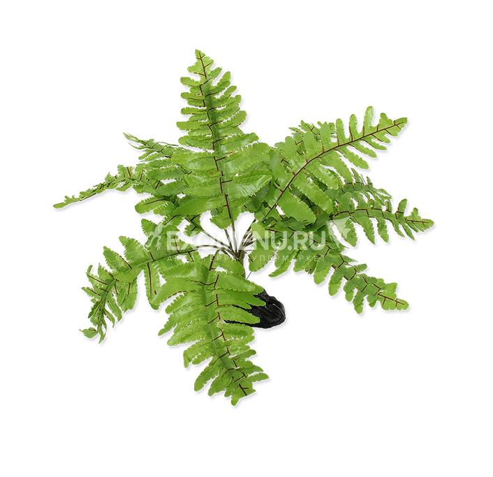 Растение пластиковое Нефролепис 20 см