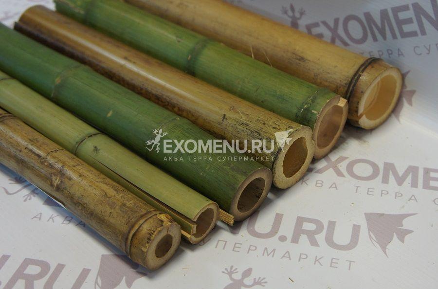 Ствол бамбука обожженный/зеленый 0,3м фото